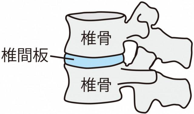 椎骨クッション部分のイラスト
