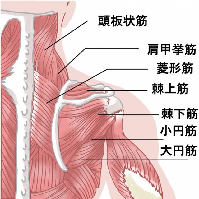 当院の頸肩腕症候群へのアプローチとは