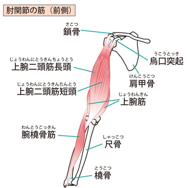 上腕二頭筋長頭腱炎とは